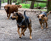 Lower Frick Park, Dogs, Pittsburgh, Hot Dog 028