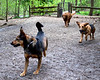 Lower Frick Park, Dogs, Pittsburgh, Hot Dog 030