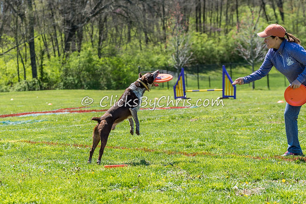 UpDog International Finals - Purina Farms - Friday, April 7, 2017