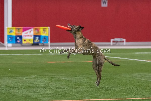 UpDog International Finals - Purina Farms - Saturday, April 8, 2017