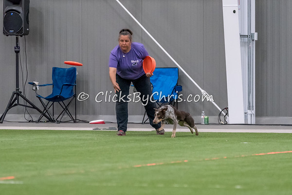 UpDog International Finals - Purina Farms - Sunday, April 9, 2017