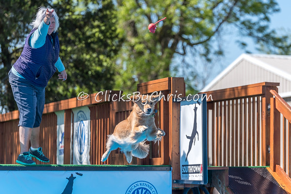 NADD / AKC Dock Diving Trial - Southtown K9 - Sunday, May 7, 2017