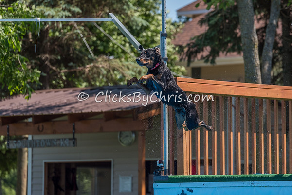 Dock Diving Competition and UpDog Challenge - Southtown K9 - Sunday, June 5, 2016