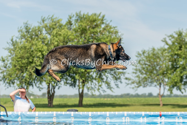 Dock Diving Competition - Southtown K9 - Sunday, July 9, 2017