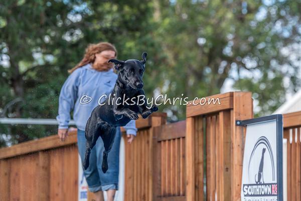 NADD / AKC Trial - Saturday, Sept. 19, 2015 - Frame: 6289