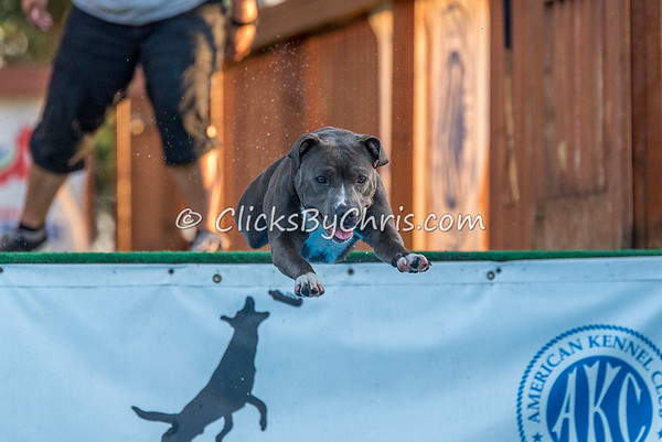 NADD / AKC Dock Diving Trial - Southtown K9 - Friday, Sept. 22, 2017
