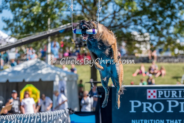 PPPIDC - Purina Pro Plan Incredible Dog Challenge 2017 - Purina Farms - Saturday, Sept. 30, 2017