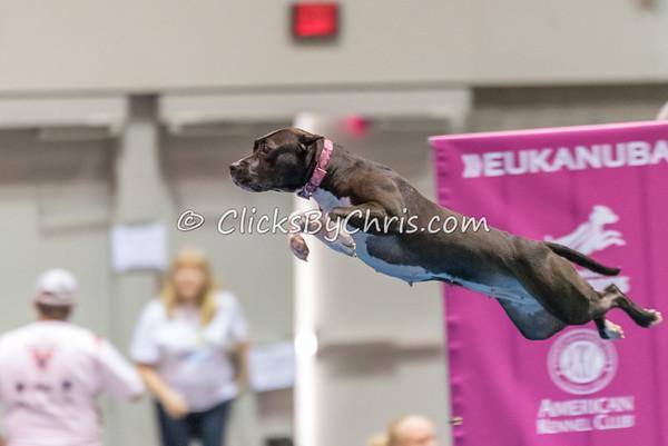2014 NADD/AKC Eukanuba Diving Dog Championship - December 12, 2014