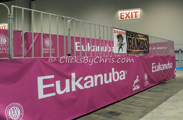 2015 NADD/AKC Eukanuba National Championship - Wednesday, Dec. 9, 2015 - Frame: 0576