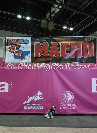 2015 NADD/AKC Eukanuba National Championship - Wednesday, Dec. 9, 2015 - Frame: 0582