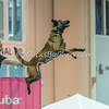 NADD / AKC Eukanuba National Championship - Orange County Convention Center - Friday, Dec. 15, 2017