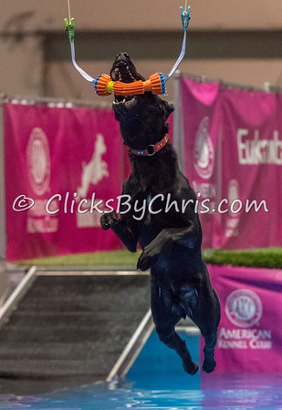NADD / AKC Eukanuba National Championship - Orange County Convention Center - Sunday, Dec. 17, 2017