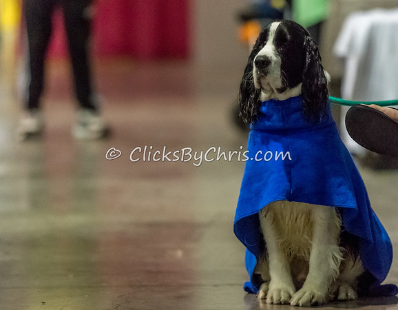 NADD / AKC Eukanuba National Championship - Orange County Convention Center - Thursday, Dec. 14, 2017
