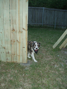 THE DOG (the reason for the fence)