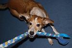 Tug!<br /> March 3, 2009