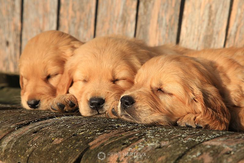 Sleepy puppies on a swing
