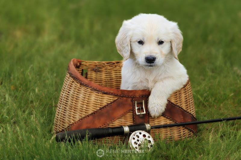 Puppy fishing buddy