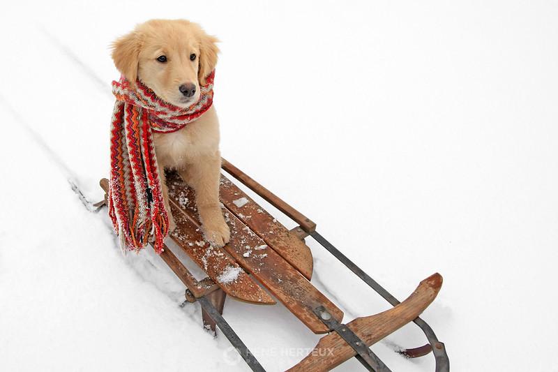 Bella on sled