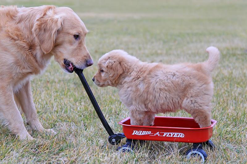 Radio flyer puppy