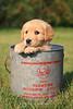 Puppy in a bucket