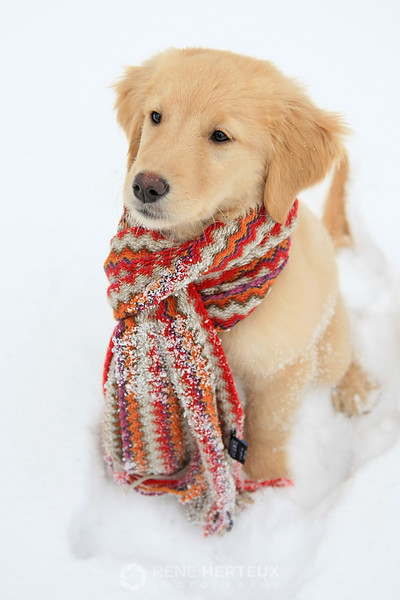Bella in snow with scarf