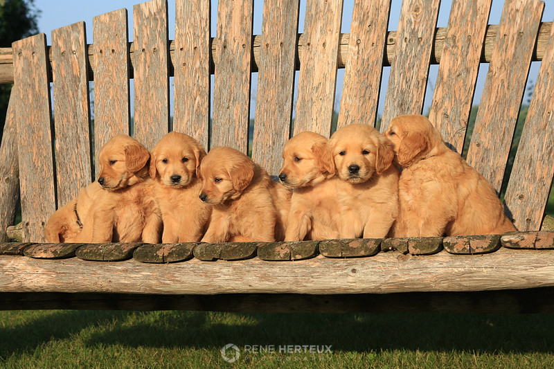 Puppies on a swing