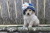 Flower power puppy