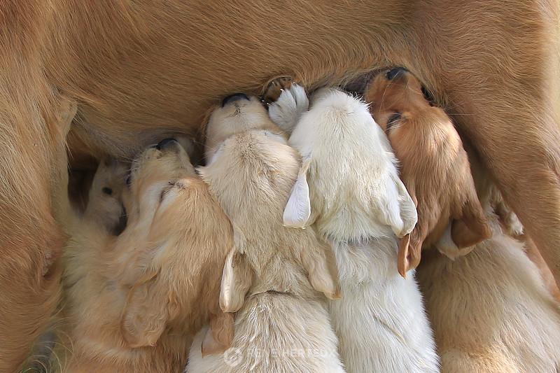Puppy feeding time