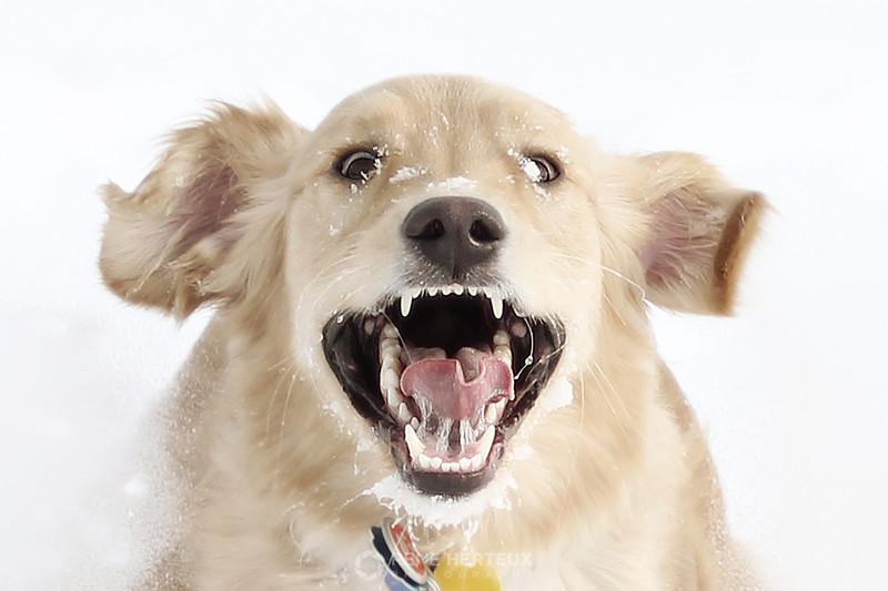 Crazy dog!
