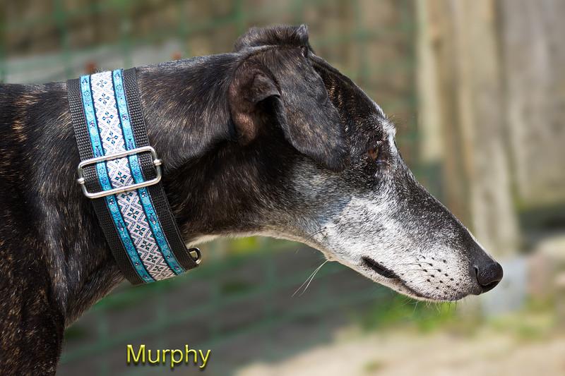 Mr  Murphy