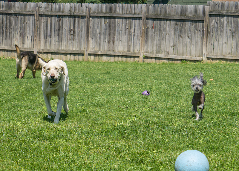 Jarvis, Lucy and Odin