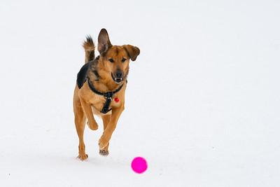 DogPhotosJan26-38