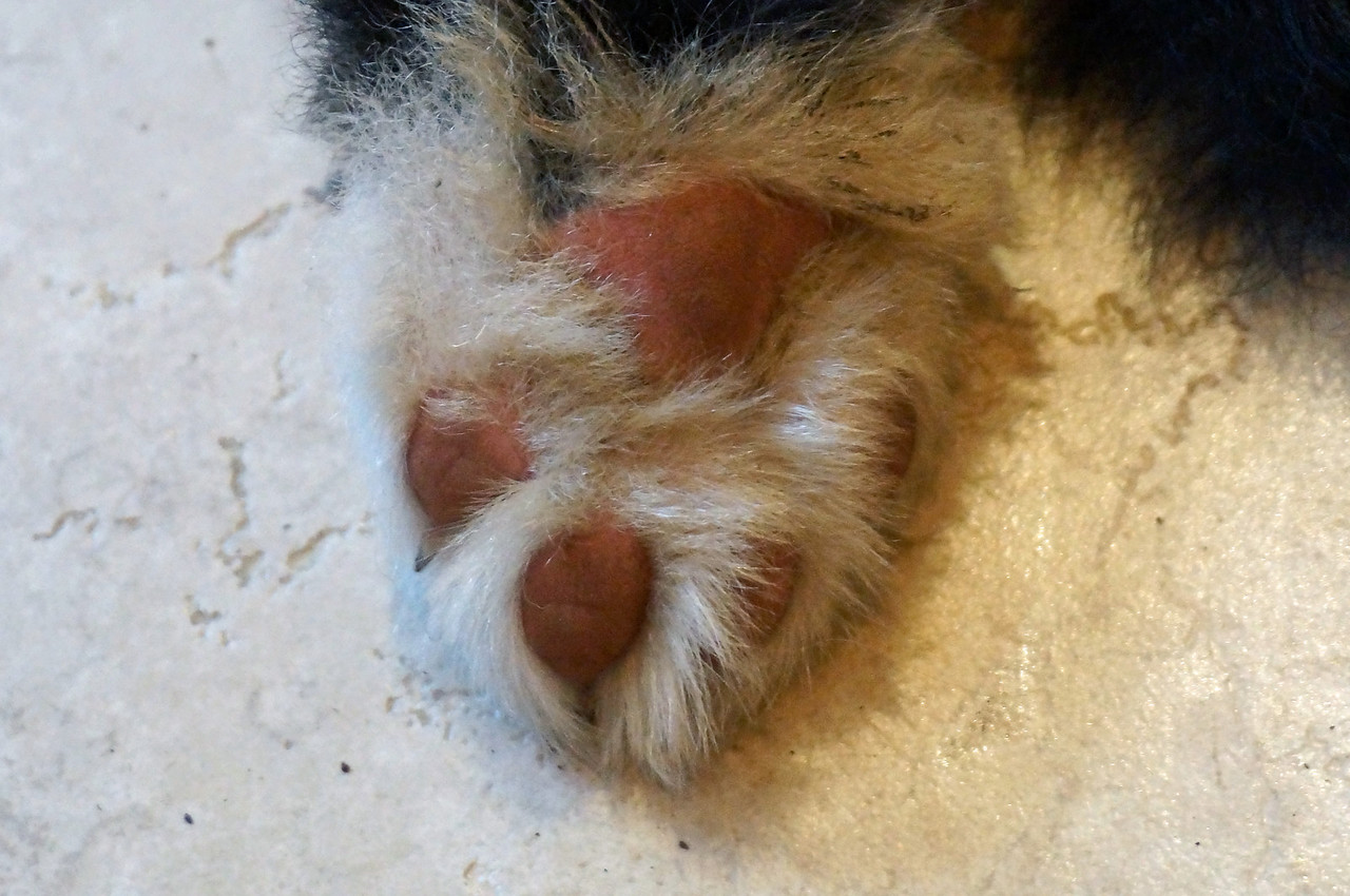 Logan's paw at 8 weeks