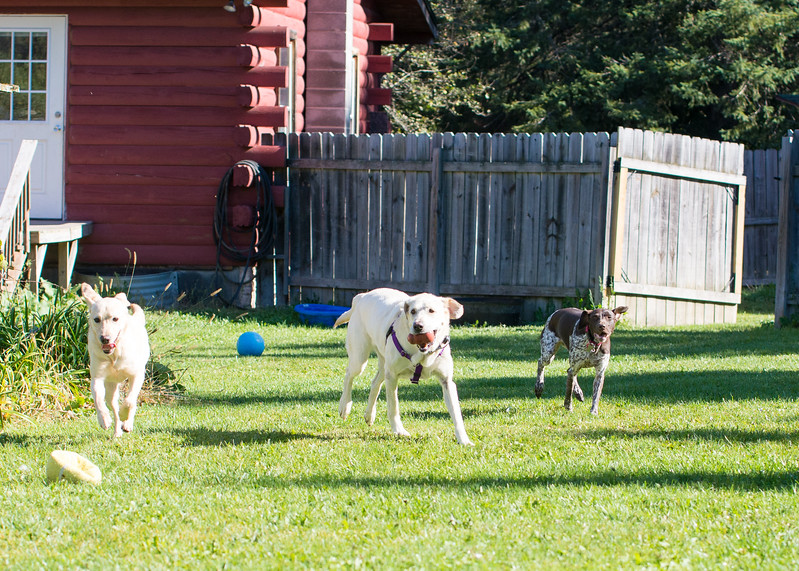 Lucy, Tanner and Ella