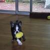 active pup