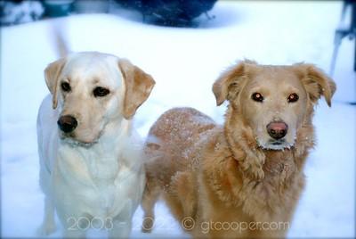 """Snow Dogs"" Fairfax, Virginia"