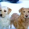 """Snow Dogs""<br /> Fairfax, Virginia"