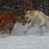 """Snow Dogs"""
