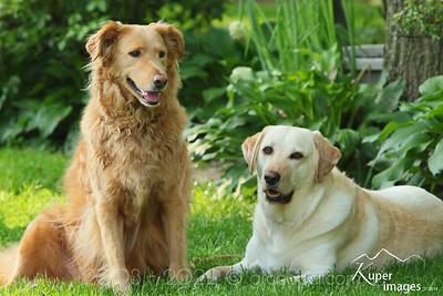 """Yard Dogs"" Mandy & Toby Fairfax, Virginia"