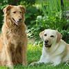 """Yard Dogs""<br /> Mandy & Toby<br /> Fairfax, Virginia"