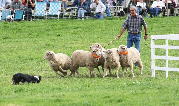 Meeker Sheepdog Championship Trials 2009