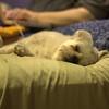 H, resting.