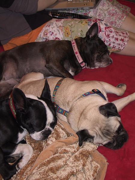 three resting dogs