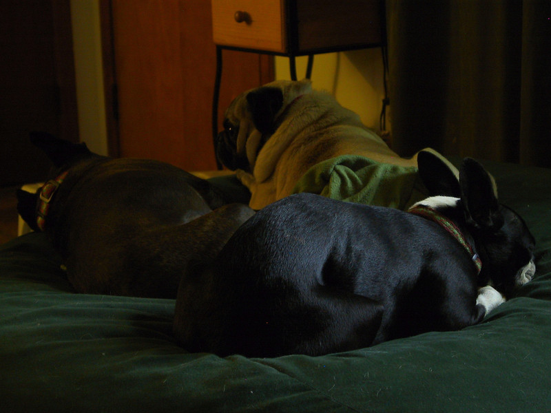 mid-day nap.