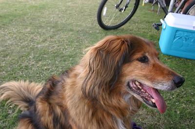 2006 ALL photos: USDAA Nationals dog agility