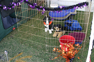 More Halloween decor. These dogs seem frozen in fear.