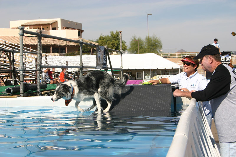 Mary V watches Bette plunge into the dock dog tank from the practice ramp