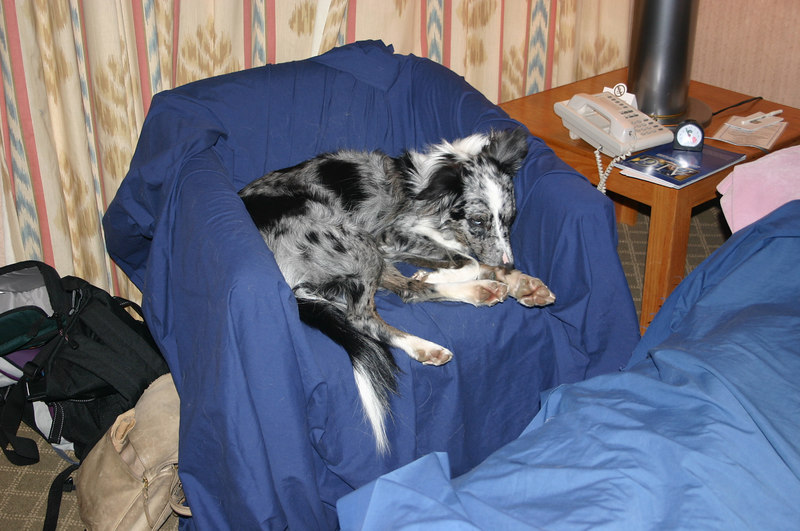 Boost eschews her crate for hotel snoozing