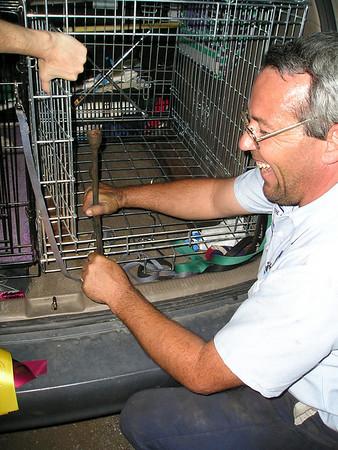 2008 USDAA Nationals Cynosports Scottsdale dog agility