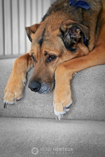 Sad looking Roxie